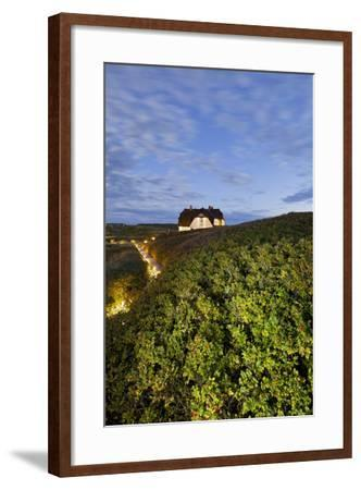 Private House, Wild Roses, Sylt (Island), Schleswig-Holstein, Germany-Rainer Mirau-Framed Photographic Print