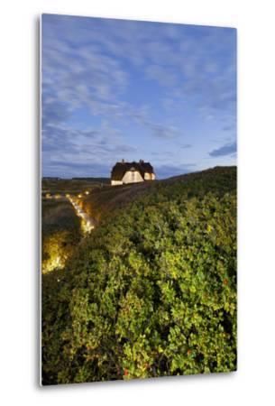 Private House, Wild Roses, Sylt (Island), Schleswig-Holstein, Germany-Rainer Mirau-Metal Print