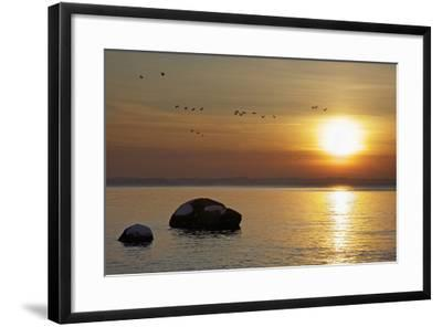 Wild Geese before Sundown over Bay of Wismar, View from the Island Poel-Uwe Steffens-Framed Photographic Print