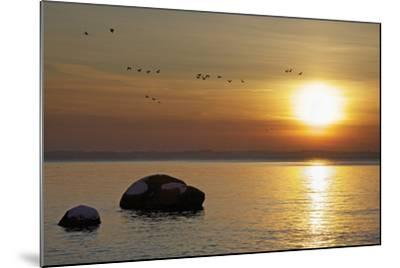 Wild Geese before Sundown over Bay of Wismar, View from the Island Poel-Uwe Steffens-Mounted Photographic Print
