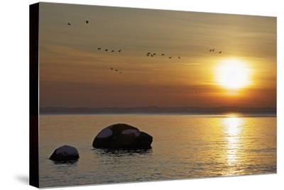 Wild Geese before Sundown over Bay of Wismar, View from the Island Poel-Uwe Steffens-Stretched Canvas Print