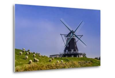 Germany, Schleswig-Holstein, North Frisia, Island of Pellworm, NordermŸhle-Udo Siebig-Metal Print