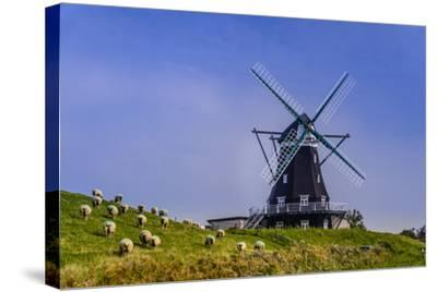 Germany, Schleswig-Holstein, North Frisia, Island of Pellworm, NordermŸhle-Udo Siebig-Stretched Canvas Print