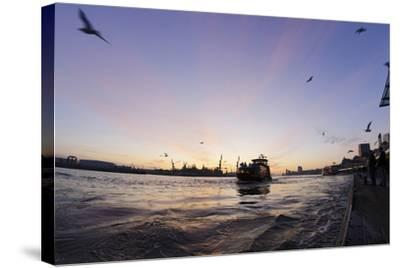 Gulls in the Backlight, Harbour Cranes, St Pauli Landing Stages-Axel Schmies-Stretched Canvas Print