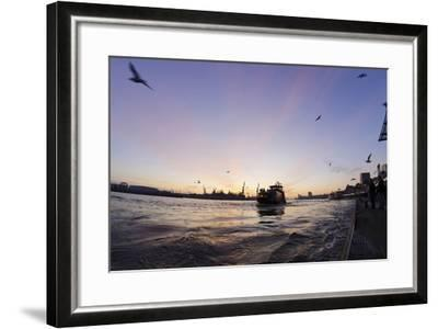 Gulls in the Backlight, Harbour Cranes, St Pauli Landing Stages-Axel Schmies-Framed Photographic Print