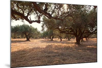 Greece, Crete, Olive Grove-Catharina Lux-Mounted Photographic Print