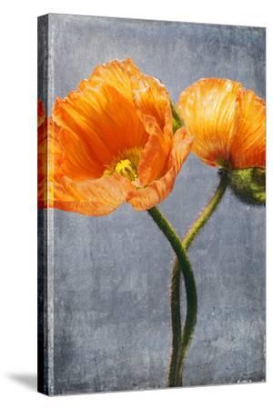 Poppy, Blossoms, Still Life-Axel Killian-Stretched Canvas Print