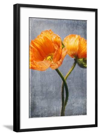 Poppy, Blossoms, Still Life-Axel Killian-Framed Photographic Print
