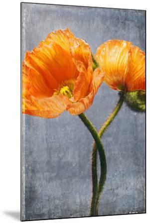 Poppy, Blossoms, Still Life-Axel Killian-Mounted Photographic Print
