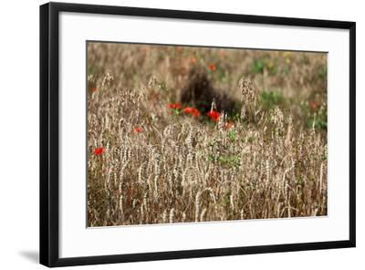 The Baltic Sea, Dar?, Wheat Ears-Catharina Lux-Framed Photographic Print