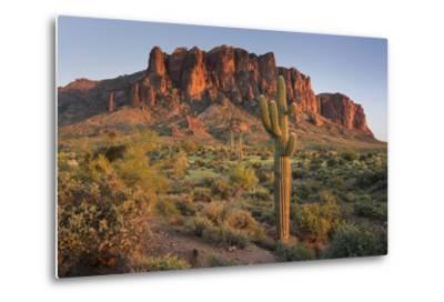 Carnegiea Gigantea, Saguaro Cacti, Hieroglyphic Trail, Lost Dutchman State Park, Arizona, Usa-Rainer Mirau-Metal Print