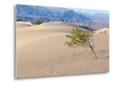 USA, Death Valley National Park, Mesquite Flat Sand Dunes-Catharina Lux-Metal Print
