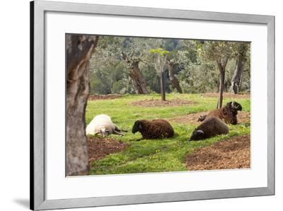 Spanish Balearic Islands, Island Majorca, Mountains of the Tramuntana, Village Dei?, Siesta-Chris Seba-Framed Photographic Print