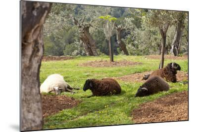 Spanish Balearic Islands, Island Majorca, Mountains of the Tramuntana, Village Dei?, Siesta-Chris Seba-Mounted Photographic Print