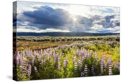 At the Hjalparfoss-Catharina Lux-Stretched Canvas Print