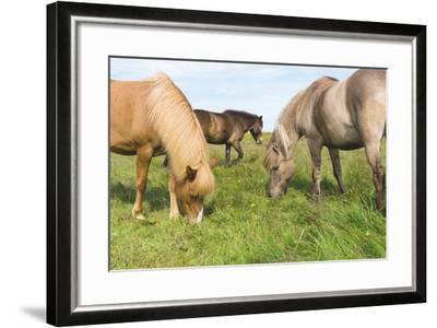 Iceland Horses-Catharina Lux-Framed Photographic Print