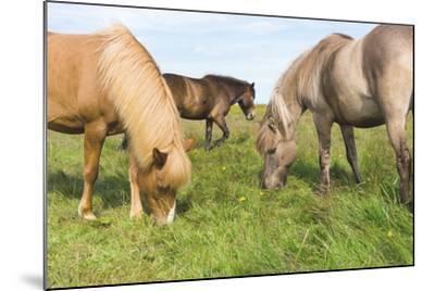 Iceland Horses-Catharina Lux-Mounted Photographic Print