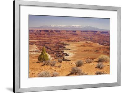 Shafer Trail Overlook, Canyonlands National Park, La Sal Mountains, Utah, Usa-Rainer Mirau-Framed Photographic Print