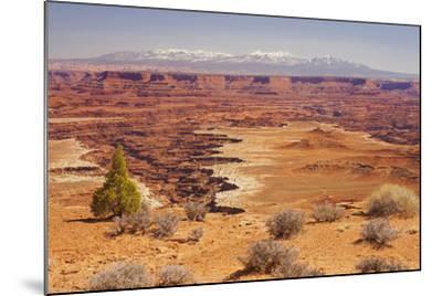 Shafer Trail Overlook, Canyonlands National Park, La Sal Mountains, Utah, Usa-Rainer Mirau-Mounted Photographic Print