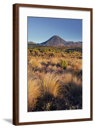 Vegetation, Mount Ngauruhoe, Tongariro National Park, Manawatu-Manganui, North Island, New Zealand-Rainer Mirau-Framed Photographic Print