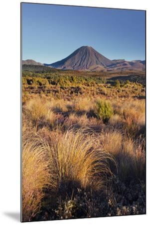 Vegetation, Mount Ngauruhoe, Tongariro National Park, Manawatu-Manganui, North Island, New Zealand-Rainer Mirau-Mounted Photographic Print
