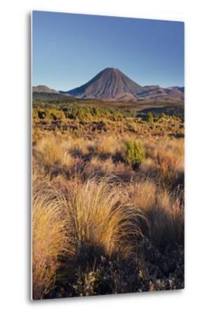 Vegetation, Mount Ngauruhoe, Tongariro National Park, Manawatu-Manganui, North Island, New Zealand-Rainer Mirau-Metal Print