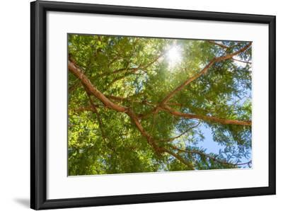 South Africa, Tree of Tamarix-Catharina Lux-Framed Photographic Print