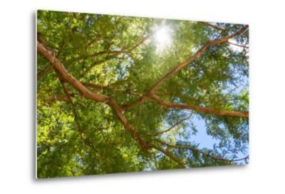 South Africa, Tree of Tamarix-Catharina Lux-Metal Print