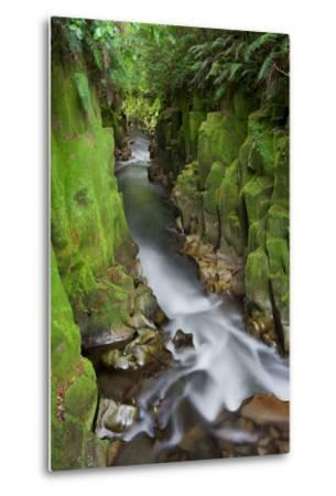 Whaiti-Nui-A-Toi Canyon, Whirinaki Forest Park, Bay of Plenty, North Island, New Zealand-Rainer Mirau-Metal Print