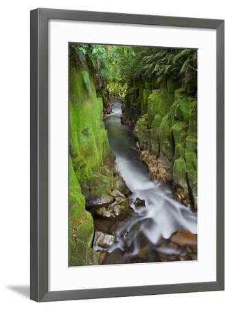 Whaiti-Nui-A-Toi Canyon, Whirinaki Forest Park, Bay of Plenty, North Island, New Zealand-Rainer Mirau-Framed Photographic Print