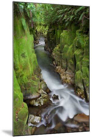 Whaiti-Nui-A-Toi Canyon, Whirinaki Forest Park, Bay of Plenty, North Island, New Zealand-Rainer Mirau-Mounted Photographic Print