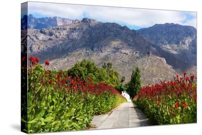 South Africa, Hex River Valley-Catharina Lux-Stretched Canvas Print