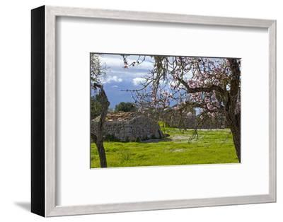 Europe, Spain, Majorca, Pink Almond Blossoms, Bitter Almond Blossom-Chris Seba-Framed Photographic Print