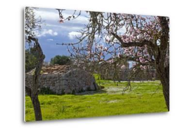 Europe, Spain, Majorca, Pink Almond Blossoms, Bitter Almond Blossom-Chris Seba-Metal Print