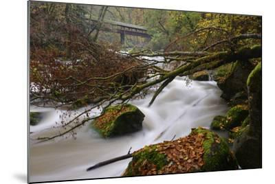 Germany, Rhineland-Palatinate, Eifel, River, Rapids of the Pr?m with Irrel-Andreas Keil-Mounted Photographic Print