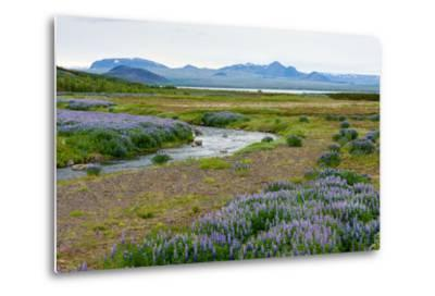 On the Way on the Golden Circle-Catharina Lux-Metal Print