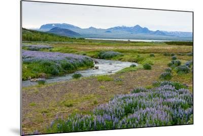 On the Way on the Golden Circle-Catharina Lux-Mounted Photographic Print