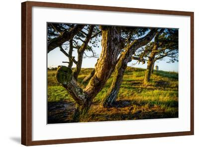The Netherlands, Frisia, Terschelling, Dunes, Pine, Pinewood-Ingo Boelter-Framed Photographic Print