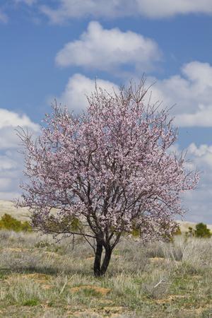 Blossoming Tree Close Konya, Anatolia, Turkey-Rainer Mirau-Framed Photographic Print
