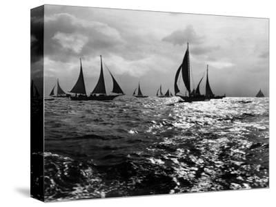 Skipjacks on the Chesapeake Bay Near Sharps Island-A. Aubrey Bodine-Stretched Canvas Print
