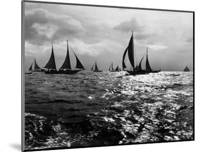 Skipjacks on the Chesapeake Bay Near Sharps Island-A. Aubrey Bodine-Mounted Photographic Print