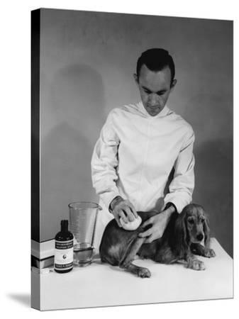 Vet and Dog-Edwin Levick-Stretched Canvas Print