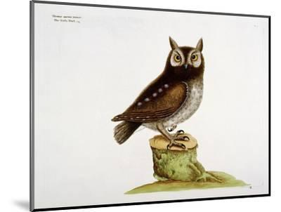 The Little Owl-Mark Catesby-Mounted Giclee Print