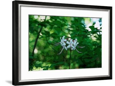 Wild Azaleas in the Mariners' Museum Park-Gregg Vicik-Framed Giclee Print