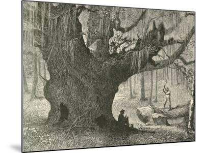 The Live Oak-Henry Linton-Mounted Giclee Print