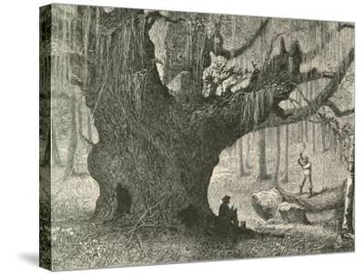 The Live Oak-Henry Linton-Stretched Canvas Print