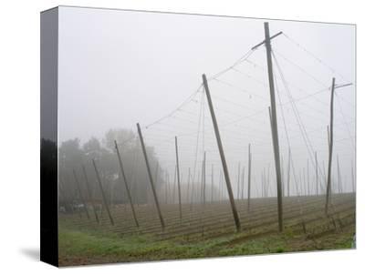 Hop Garden in the Hallertau, Autumn, Fog-Harald Kroiss-Stretched Canvas Print