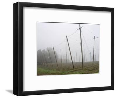 Hop Garden in the Hallertau, Autumn, Fog-Harald Kroiss-Framed Photographic Print