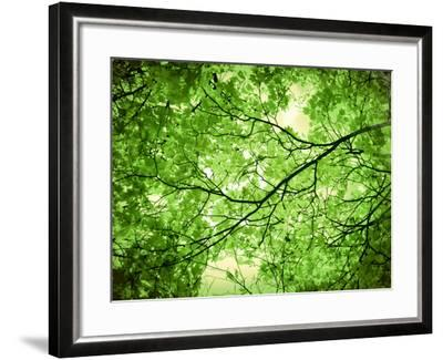 Foliage Tree, Branches, Branches, Leaves, Green-Alaya Gadeh-Framed Photographic Print