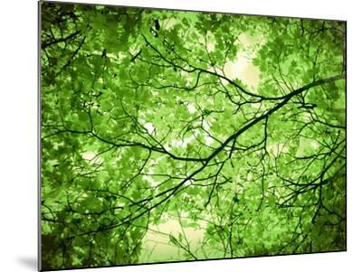 Foliage Tree, Branches, Branches, Leaves, Green-Alaya Gadeh-Mounted Photographic Print